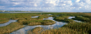 Photo of Kendall-Frost Marsh
