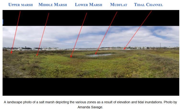 Photo of salt marsh habitats